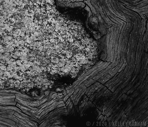Tree Whorl Detail 001